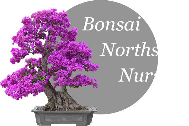 Bonsai Northside Nursery Logo
